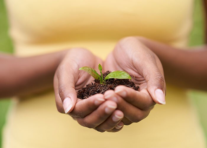 A woman holding a seedling in some dirt in the palm of her hands